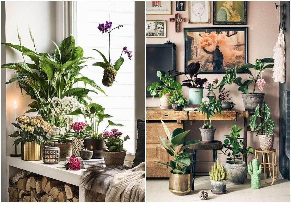 Inspirações e itens de decor para colocar sua plantinha | Dose de Ilusão